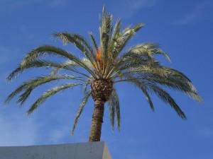 Padiglione del Bahrain, la più alta palma dell'Expo